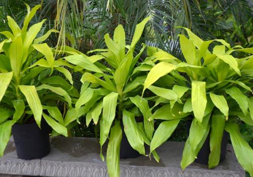img-services-location-plante-verte