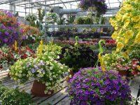 Arrangement floraux créés par l'équipe de Charbonneau L'Expert. Sélection de pots de fleurs à suspendre