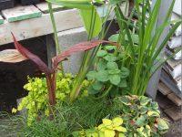 Pot de fleurs extérieursArrangement floraux créés par l'équipe de Charbonneau L'Expert