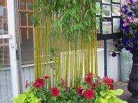 Arrangement de fleurs et plantes avec bamboo