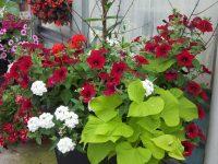 Confection de pot de fleurs extérieur