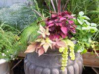 Arrangements floraux créés par l'équipe de Charbonneau L'Expert