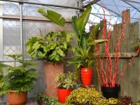 Sélection de plantes tropicales, plantes vertes et arrangement de plantes d'intérieur