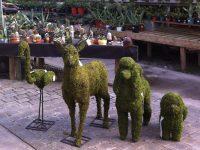 Sculptures végétales Charbonneau l'Expert