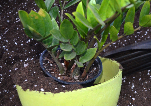 Empotage de plante chez Charbonneau l'Expert