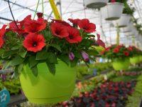 Panier de fleurs suspendues