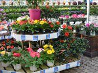 Fleurs annuelles et vivaces chez Charbonneau L'Expert