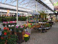 Plantes au Centre du Jardin de Charbonneau L'Expert