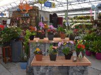 Plantes ornementales au Centre du Jardin de Charbonneau L'Expert