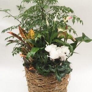 Jardin de plantes douces fleurs