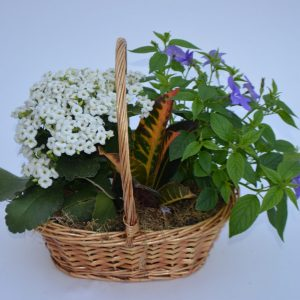 Jardin de plante petite amitié