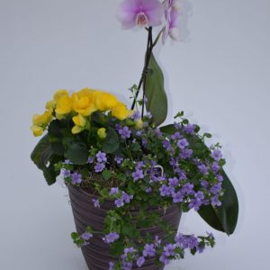 Jardin de plantes pure violet