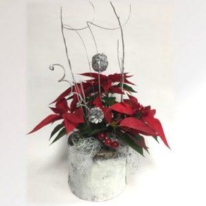 poinsettia rouge de noel avec pot en écorce