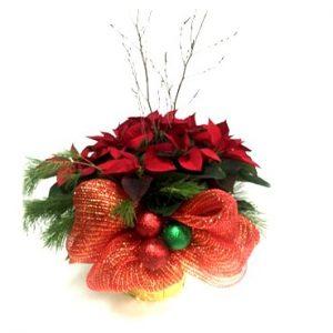 poinsettia rouge décoré de noel