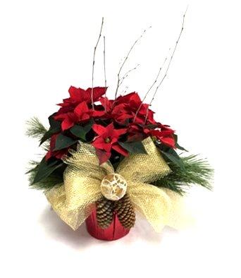 poinsettias rouge décorés de noel