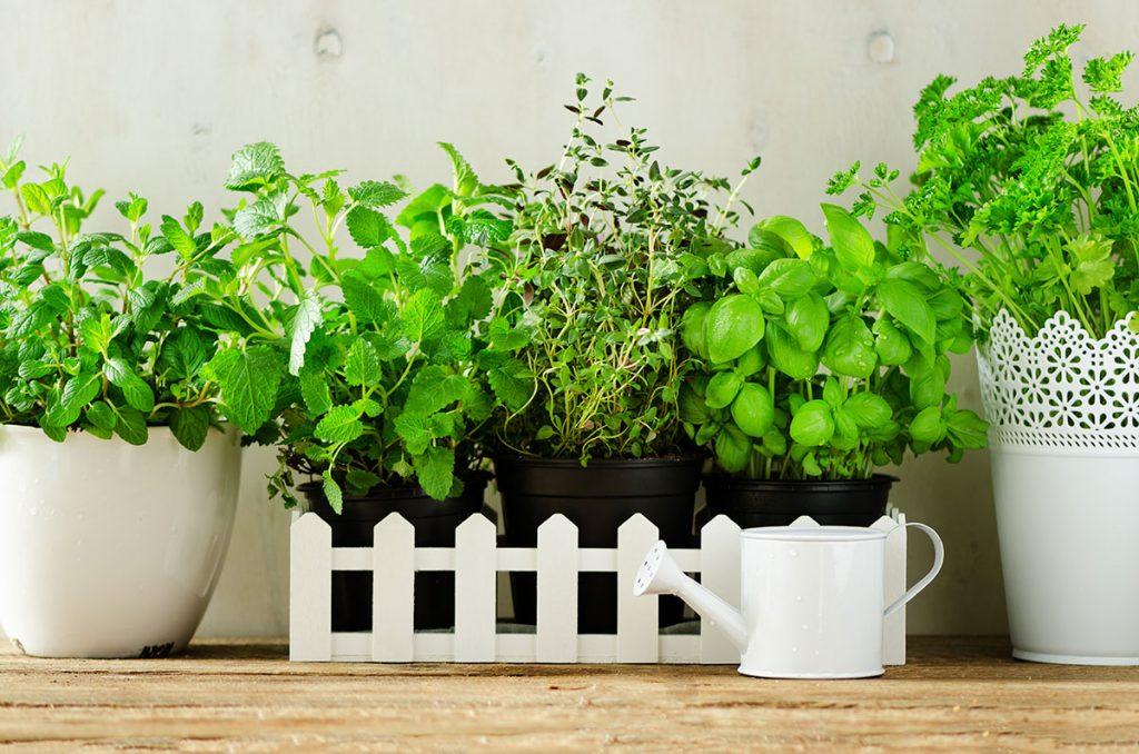 Atelier : Confectionnez votre jardinière comestible.