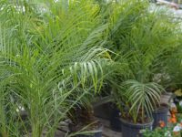 location-plantes-laval-2