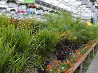 location-plantes-laval-3