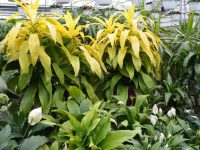 location-plantes-laval-4