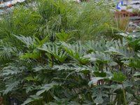 location-plantes-laval-5