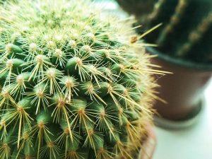 Cactus et succulentes chez Charbonneau l'Expert