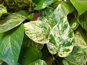 Plantes d'intérieur chez Charbonneau l'Expert