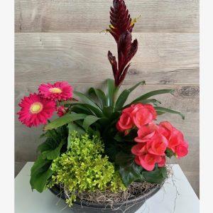 Jardin de plantes coloré