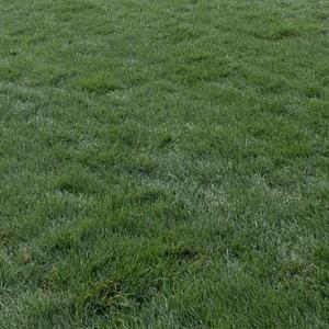 Rouleaux de gazon Kentucky