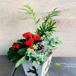 jardin de plantes de Noël