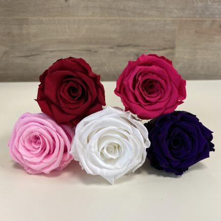 roses éternelles roses