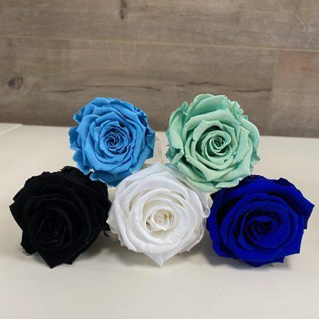 roses éternelles bleues