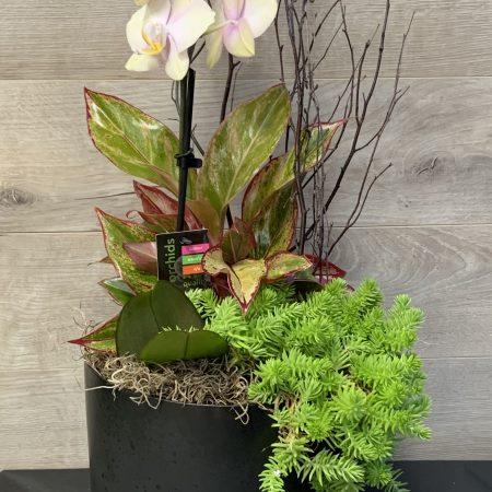 jardin de plantes Barbara