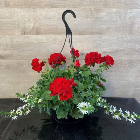 Panier de géraniums rouge et scaevola